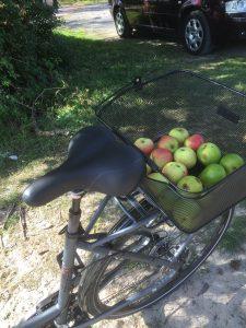 Apfelbirne